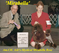 Am. CH. Ash's-Mystical Mirabella Rose
