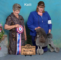 Kaili...BIS Am/Can CH. Amity Mystical Horizon's Heaven Sent ....... Congrats to owner Dawn Strumbel for placing # 1 Miniature in the US for 2009!
