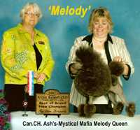 Can. CH. Ash's-Mystical Mafia Melody Queen