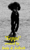 Seppi owned by Inda & JoBeth