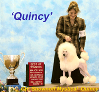 'Quincy' .. CH. Shownoff Mystical Quincy..... owned by Cathy Adamson