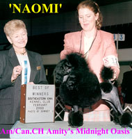 Naomi. Am./Can. Champion Amity's Midnight Oasis.    **now owned by Kerry Tergelic