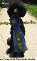 'Kodi' ...  Ash's-Mystical Commander Kodiak  'Flyball Champion'  ... owner Katherine Edrington