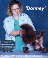 'Donney'.. Am/Can. CH. Amity's Donneybrooke