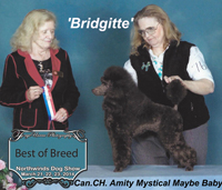 'Bridgett' ...  Can. CH. Amity Mystical Maybe Baby