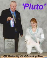 'Pluto'...CH. Harten Mystical Counting Stars