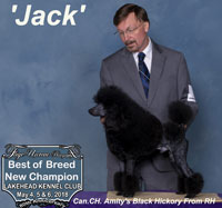 'Jack'.. Can. CH. Amity's Black Hickory From RH