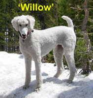 Willow Lorien