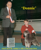 Donnie  Am/Can CH. Amity's AKA The Last Don    **Owned by Jane Smythe & Anne Seppo