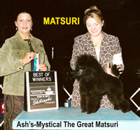 'Matsuri'.... CH. Ash's-Mystical The Great Matsuri..... now owned by Andre' Todaka