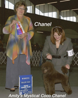 'Chanel'.... CH. Amity's Mystical Coco Chanel