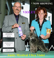 *** New CHampion***Am/Can. CH. Amity Mystical Ultra Violet,,,,,,,,,now owned by Jeff, Anna, & Alyssa Urbaniak