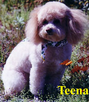 Teena owned by Shirley Greene