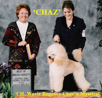 CH. Wavir Regency Chaz'n Mystical  ** now owned by Tanisha Blaze