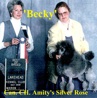 Becky. Can. CH. Amity's Silver Rose.    *now owned by Ken Brady