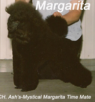 <p>'Margarita' ... 'CH. Ash's-Mystical Margarita Time Mate'</p>