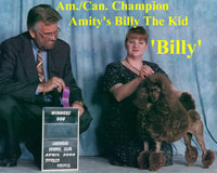 Billy. Am./Can. Champion Amity's Billy The Kid.    **now owned by Carol Barber