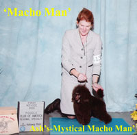 CH. Ash's-Mystical Macho Man....new owner Kwon Lee