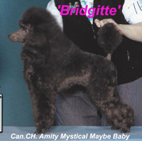 'Bridgitte'... Can. CH. Amity Mystical Maybe Baby