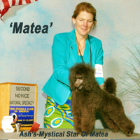 CH. Ash's-Mystical Star Of Matea...owned by Dr. Sue Boehm